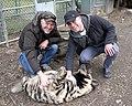 Striped hyena at Jungle Cat World 2.jpg