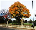 Stroud ... must be autumn. - Flickr - BazzaDaRambler.jpg