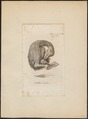 Struthio camelus - 1810 - Print - Iconographia Zoologica - Special Collections University of Amsterdam - UBA01 IZ18900005.tif