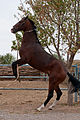 Studfarm in Turkmenistan - Flickr - Kerri-Jo (19).jpg