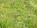 Sub-alpine meadow 2.jpg