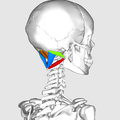 Suboccipital muscles02.png