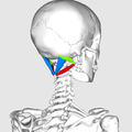Suboccipital triangle02.png