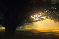 Sun-rise, Dinajpur, Bangladesh.jpg