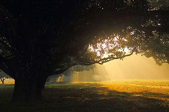 Dinajpur - Image: Sun rise, Dinajpur, Bangladesh