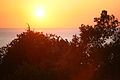 Sunset light (3337602957).jpg