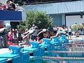 Swimmers diving off starting blocks doing Free Colchian 1.jpg