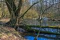Tůně v NPR Bohdanečský rybník 11.jpg