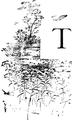 T-Bird-Lore 1 2-0059.png