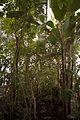 TU Delft Botanical Gardens 70.jpg