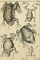 Tableau encyclopédique et méthodique des trois règnes de la nature - dédié et présenté a M. Necker, ministre d'État, and directeur général des Finances (1789) (14595768378).jpg