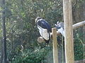 Taronga Zoo (6182533346).jpg