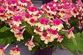 Tatton Park Flower Show 2014 067.jpg