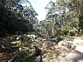 Telegraph Saddle to Sealers Cove Track, Wilsons Promontory National Park 06.jpg