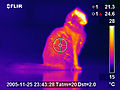 Infrared thermography of the cat.