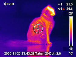 Image Result For Dog Body Temperature
