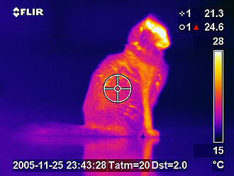Thermography - Thermogram of a cat