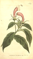 The Botanical Magazine, Plate 225 (Volume 7, 1794).png