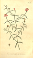 The Botanical Magazine, Plate 233 (Volume 7, 1794).png