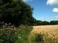 The Dearne Way - geograph.org.uk - 517863.jpg