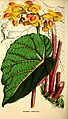 The Florist and horticultural journal (1853) (14801333363).jpg