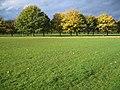 The Meadows - Flickr - einszwodrei.jpg