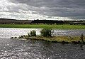 The River Tweed - geograph.org.uk - 1467821.jpg