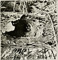 The birds of Yorkshire - being a historical account of the avi-fauna of the County (1907) (14775321713).jpg