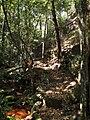 The climb up to Kariong Ridge - panoramio.jpg