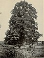 The tree book - A popular guide to a knowledge of the trees of North America and to their uses and cultivation (1920) (14783049375).jpg