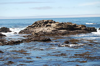 Stewarts Point State Marine Reserve & Stewarts Point State Marine Conservation Area