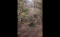 Tiger in Ranthambore 14.png