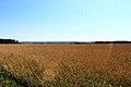 Toguchinsky District, Novosibirsk Oblast, Russia - panoramio (4).jpg
