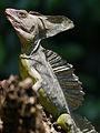 Tortuguero, Costa Rica (14044668147).jpg