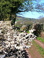 Track near Arnaby - geograph.org.uk - 541890.jpg