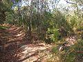 Trackhead of the connecting bush trail towards Girrakool - panoramio.jpg