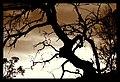 Tree (59797998).jpeg