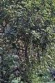 Tree I IMG 3274.jpg