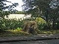 Tree stump, Enfield Road, Enfield - geograph.org.uk - 991782.jpg