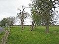 Trees beside Whitworth Lane - geograph.org.uk - 404385.jpg