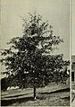 Trees for Long Island (1900) (20369736810).jpg