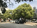 Trees in Kego Shrine.jpg