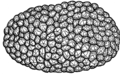 Truffle (PSF).png