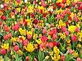 Tulip 1300184.jpg