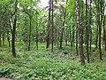 Turbiv park 146.jpg