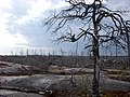 Tyresta Nationalpark 2011a.jpg