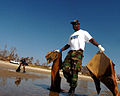US Navy 051025-N-3729H-067 Electricians Mate 1st Class Christopher Beverly, assigned to the Nimitz-class aircraft carrier USS John C. Stennis (CVN 74), gathers debris on a beach in Waveland, Miss.jpg
