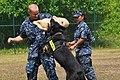 US Navy 100720-N-1401J-084 Master-at-Arms 1st Class Jennifer Trambulo, right, a Navy kennel master, and Mass Communication Specialist Seaman Michael Thompson perform a biting decoy drill during military working dog training.jpg