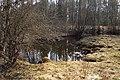 Ulmu allikas Mahtra looduskaitsealal.jpg