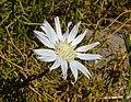 Unidentified desert plant (48338281656).jpg